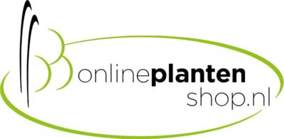 Waar kunt u mooie vaste planten kopen?